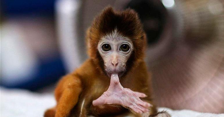 Mejores Fotografías de animales