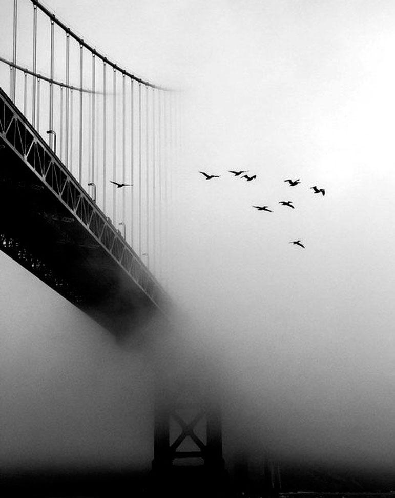 61 fotograf as en blanco y negro - Blanco y negro ...